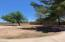 Over 30,000 sq ft lot with mature trees