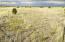 126 Lake View Ranch, Parcels 1-4, Concho, AZ 85924