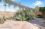 Backyard Facing Kitchen Butler's Door & Koi Pond