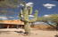 Every homeowner needs a great saguaro for the visitors to stand in front of and get there photo taken for back home!
