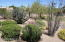 The back yard is desert landscape with a combination of succulents and flowering bushes.