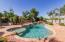 Established trees and Shrubs around Pool and Yard