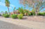 Beautifully desert landscaped with massive ironwood tree