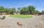 Large Grass Area For Kiddos and Pets To Play