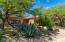 Beautiful Native Desert Plants in Front Yard!