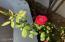 This Rose Bush Conveys!