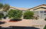 Backyard with 2 mature, dwarf, fruit trees