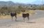 2452 E HOLIDAY Drive, Tombstone, AZ 85638