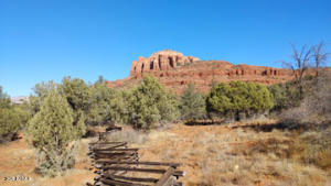 View from fence line through Coconino National Forest.