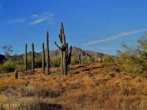 Mountain Views & Saguaros