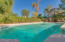 Pool surrounded by Pines and Palms