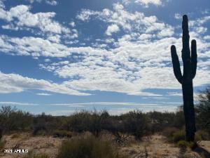 Beautiful Saguaro Cactus on property.