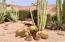 Beautiful blooming cactus.