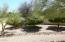 Backyard citrus trees