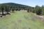 Lush Mountain Meadow at 7820 feet!