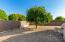 Fruit trees in back yard