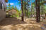 1/3 acre treed lot