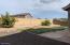 Back Yard 06