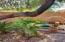 Secret Garden, two raised garden beds for the Green Thumb.