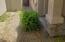 Gardina bush at the front door