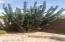 Mature Cactus