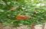 Pomagrante tree