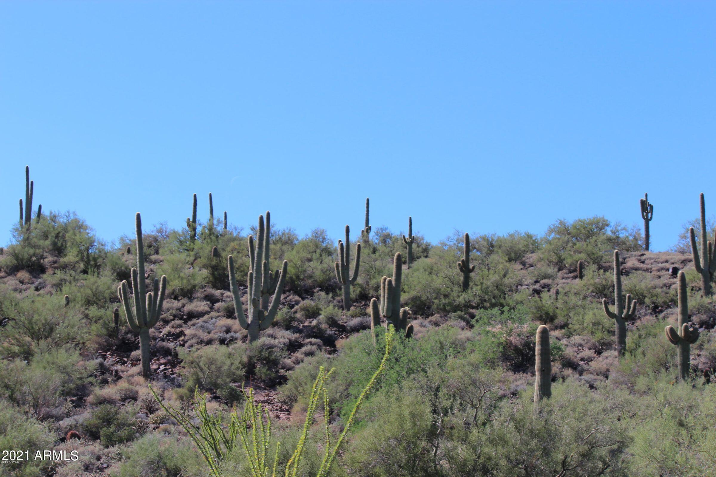Natural desert