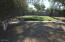 Mature trees in backyard