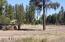 2771 E STATE ROUTE 260, Overgaard, AZ 85933