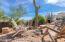 A plethora of mature cacti!
