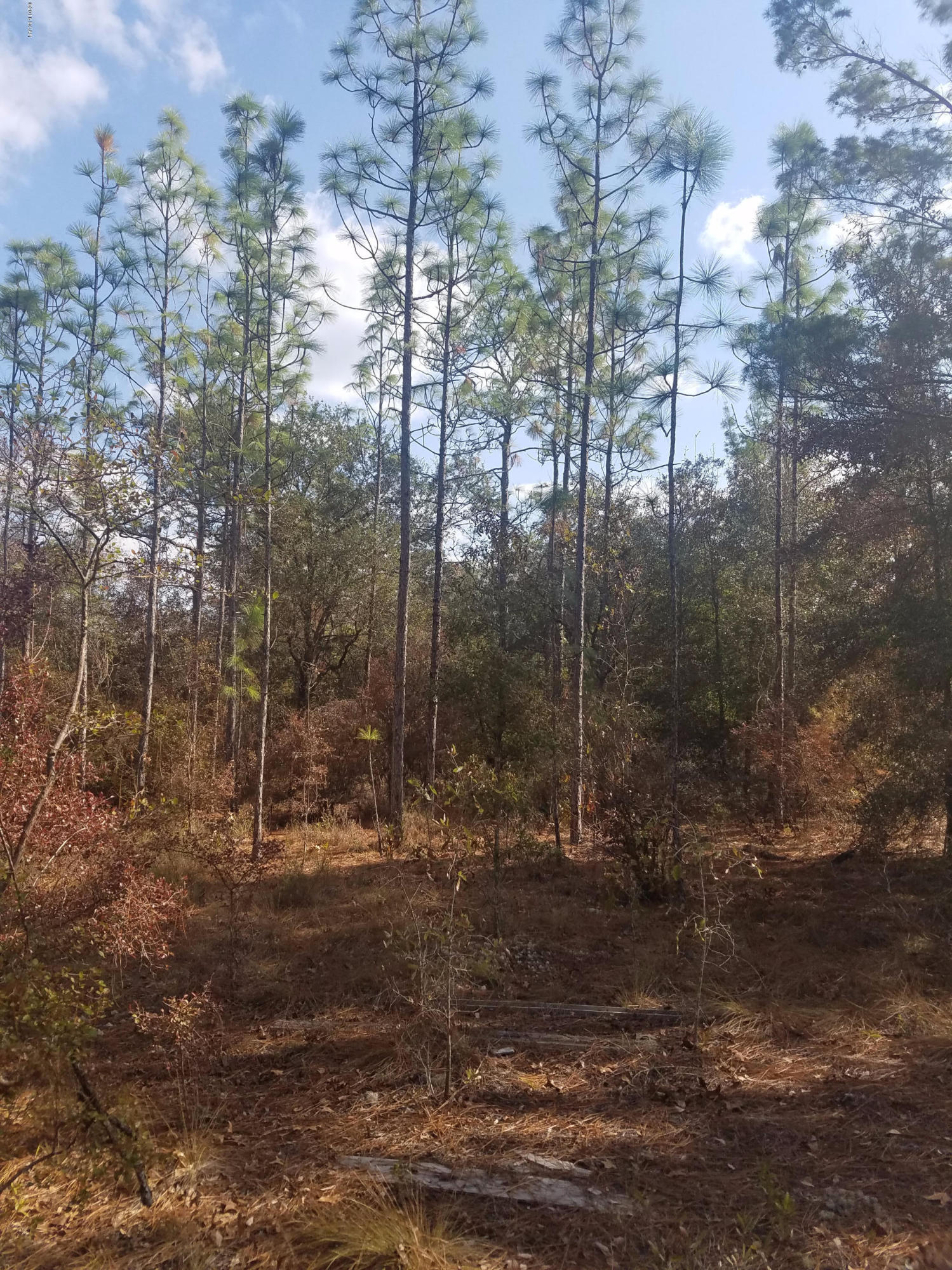 Photo of LOT B177 QUAIL RIDGE Drive Chipley FL 32428