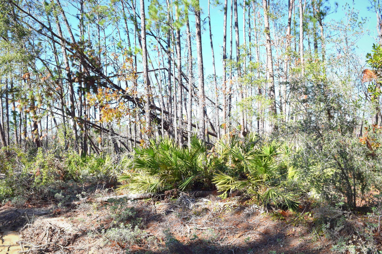 Photo of XXX Sally Road Chipley FL 32428