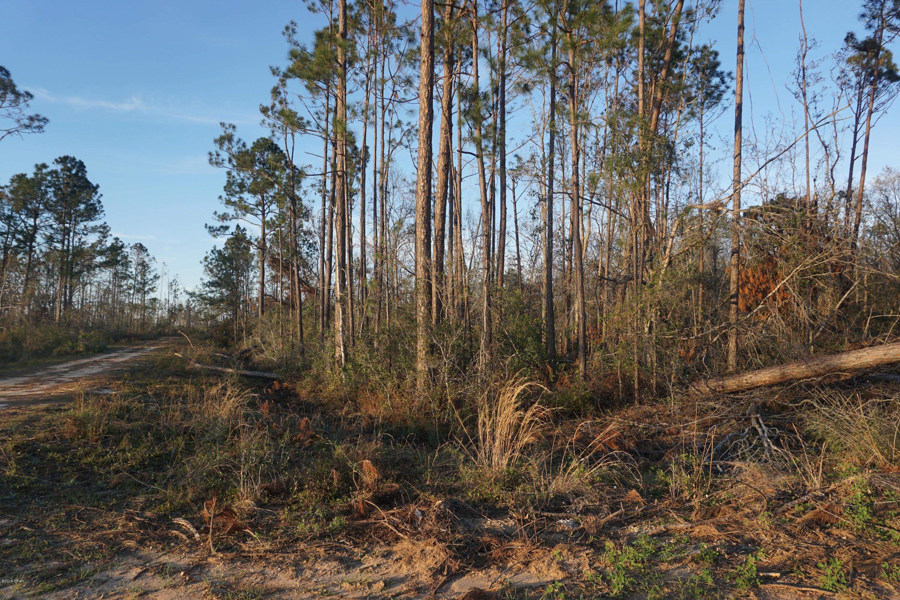 Photo of 000 TAMARAC Road Marianna FL 32448