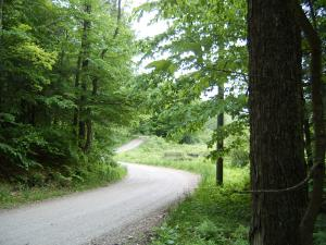 Town maintained road leads through the woods