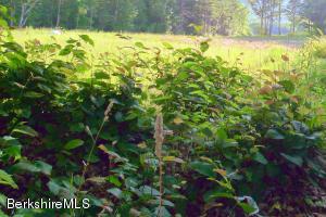 Lot 8-5 SWEET FARM Williamstown MA 01267