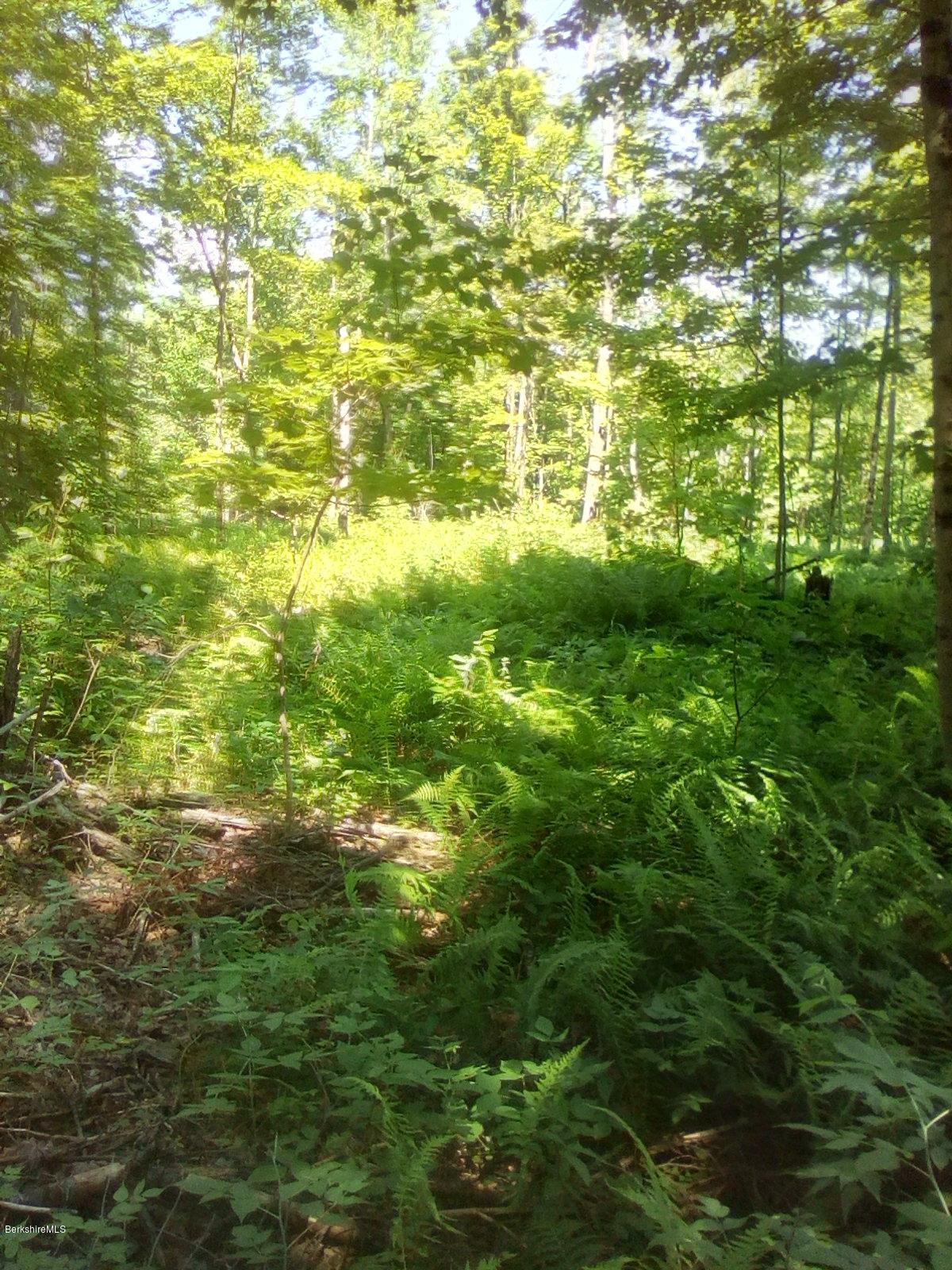 0 Pierce Rd, Windsor, Massachusetts 01270, ,Land,For Sale,Pierce Rd,232891