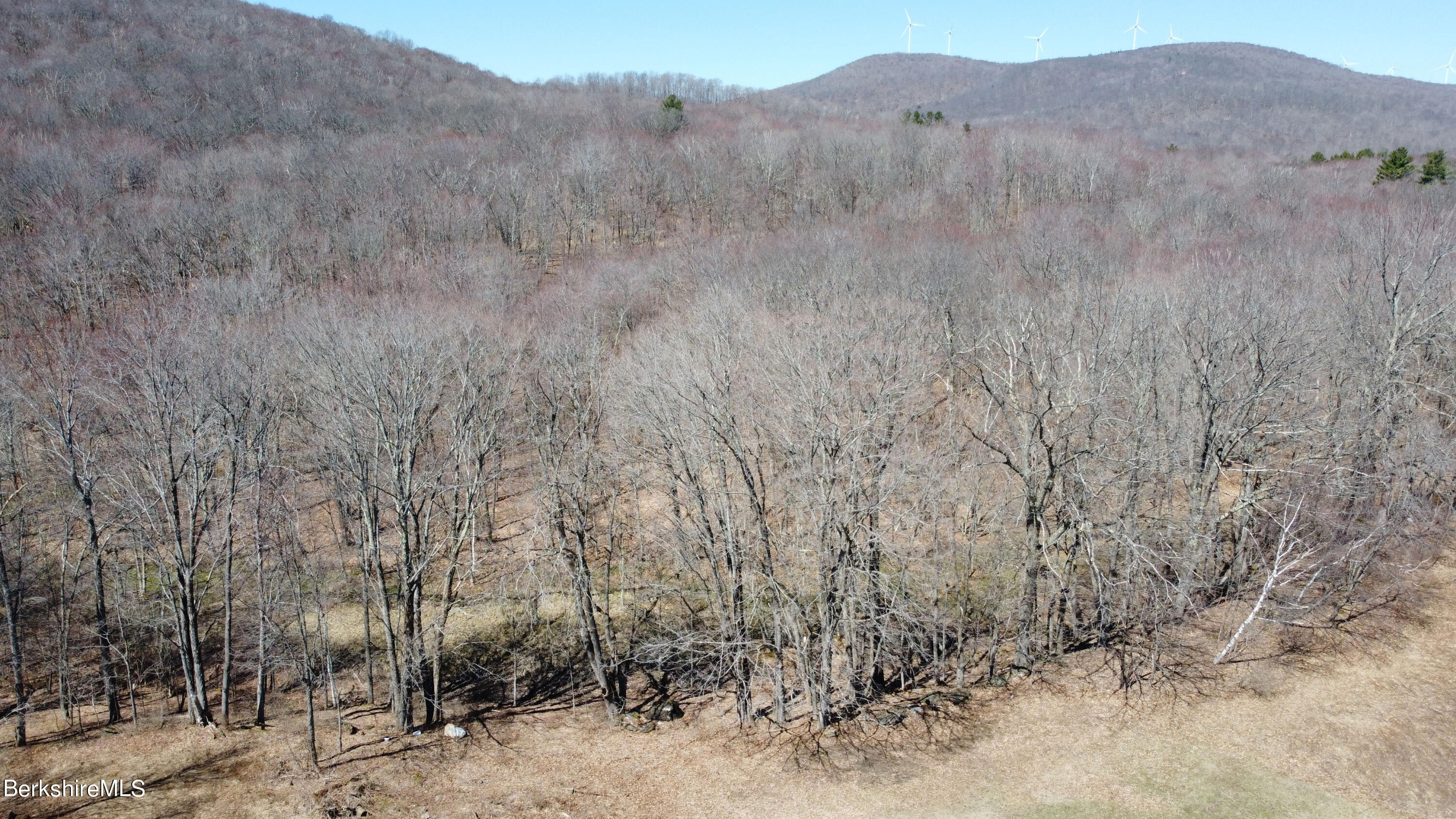 Drone Shot of Tree Area