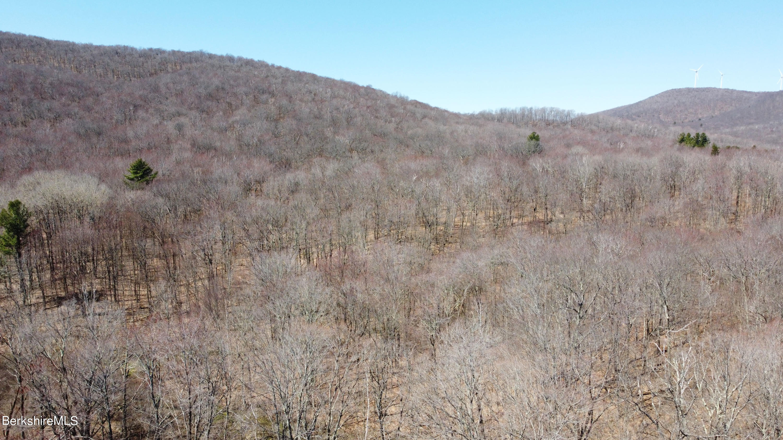Mountain Views, Trees