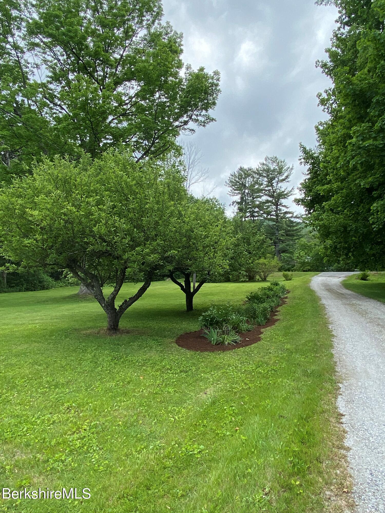 driveway apple trees