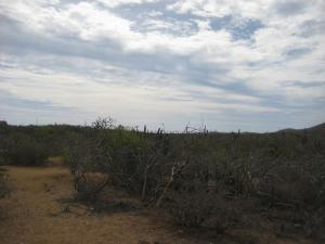 sin Nombre Lote 1289 Cerritos Lot 1289   property for sale