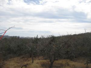 Sin Nombre Lote 1013 Lot 1013 Cerritos Hillside   property for sale