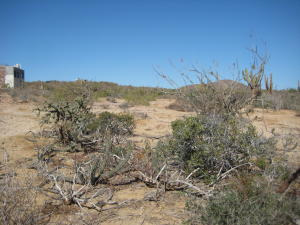Sin Nombre Lot 2196 Lot 2196 Los Cerritos   property for sale