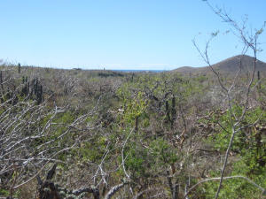 Sin Nombre Lote 1275 Lot 1275 Cerritos   property for sale