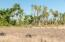 Oasis setting. Level lot, ideal for Hacienda style home. 3/4 acre in La Cachora