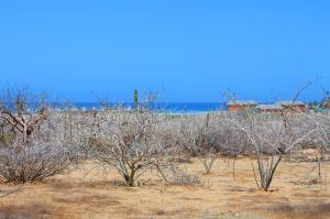 Calle sin Nombre, South Cerritos Walk To Beach, Pacific,