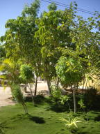 Mature fruit trees and lawn