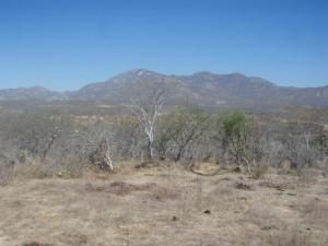 Las Vinoramas, Love it Ranch, Cabo Corridor,