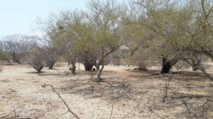 Los Barriles, Palo BLanco Lot#30, East Cape,