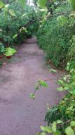 La Ribera, Amazing 11 acres Organic Farm, East Cape,