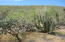 Sin Nombre, Los Cerritos Lot 1013, Pacific,